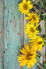 Background with yellow sunflowers on old wooden boards with peel
