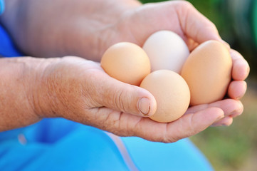 Farmer holding fresh organic eggs