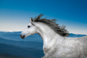 White Horse portrait runs on the mountains and blue sky background
