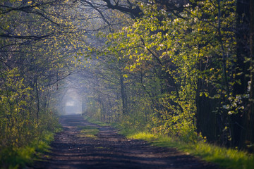 Forest path in spring, southern Poland