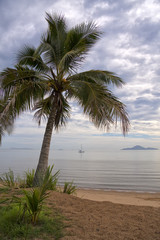 Coconut Palm Tree and boat in bay
