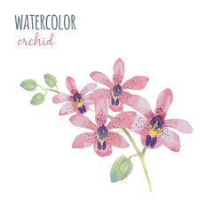 Watercolor illustration orchid flowe