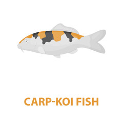 Carp-koi fish icon cartoon. Singe aquarium fish icon from the sea,ocean life cartoon.