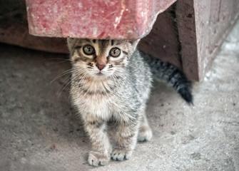 Homeless Kitten In The Street