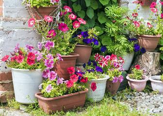 multicolored petunias in flower pots