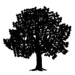 silhouette detached tree maple with leaves