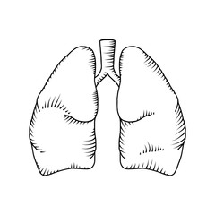 Lung vector detailed illustration