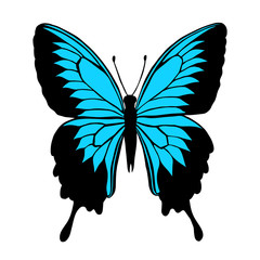 Vector illustration of butterfly with blue wings. Butterfly Papilio blumei. Blue Mountain Swallowtail Butterfly