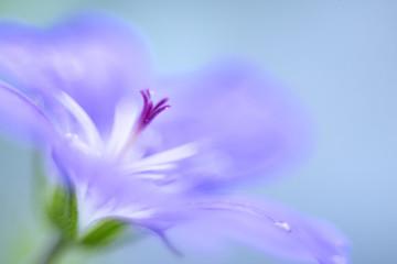 Macro fotografia di un fiore selvatico con una goccia di rugiada