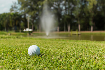 Golf ball on green grass background