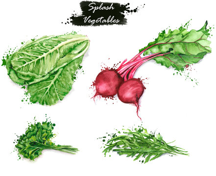 Hand-drawn watercolor food illustrations. Isolated drawings of the fresh vegetables - lettuce, red beet, parsley and arugula. Splash style