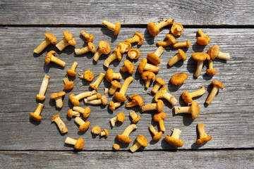 Fresh chanterelle mushrooms on wooden table. Top view