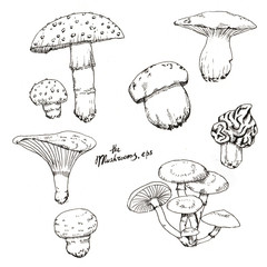 Hand drawn line art. Ink sketch of different autumn mushrooms isolated on the white background