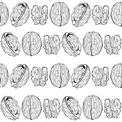 Walnuts. Seamless vector pattern. Outline hand drawn illustration