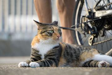 猫 トラ猫