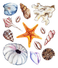 Watercolor sea ocean seahorse seashell coral ammonit urchin set