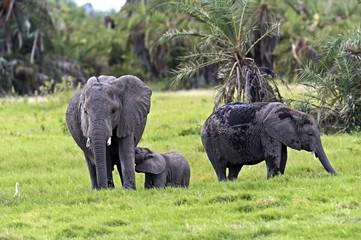 Elephants in the savannah