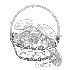 Wicker basket with Amanita or Fly agaric mushroom isolated on white. Outline poisonous red-cup mushroom in line art. Floral elements in contour style for autumn design and adult coloring book.