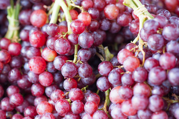 Closeup of bunches of red grapes