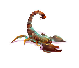 Scorpion on a white background