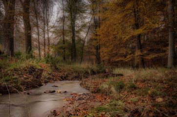 Blentarp, Creek Fall, Skane County, Sweden, forest scene in autumn