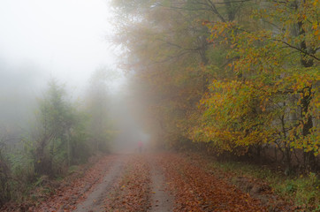 Foggy autumn day, Skane County, Sweden