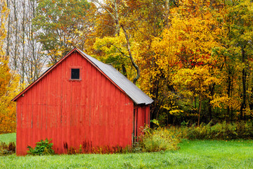 Red barn in autumn, by colorful yellow and orange fall trees and leaves