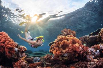 Wall Mural - Reef