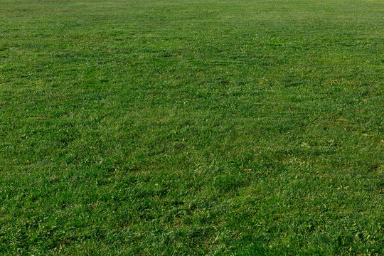 background of green grass lawn texture.