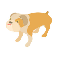 English bulldog icon in cartoon style isolated on white background. Animal symbol