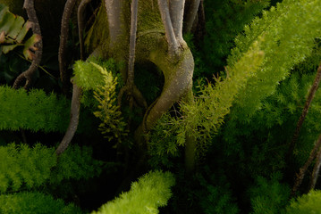 Tree Roots With Moss and Plants