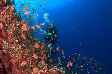 Scuba dive. Coral Reef. Tropical fish. Underwater sea ocean
