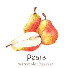 Watercolor autumn harvest. Isolated hand-drawn illustration of tasty ripe pears on the white background.