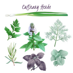 Culinary Herbs. Hand drawn vector illustration of favorite herbs as dill, chive, peppermint, oregano, rosemary, parsley, basil on transparent background.