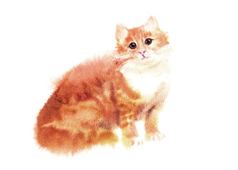 Watercolored illustration of red cat