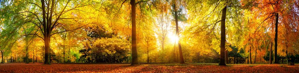 Wall Mural - Panorama von einem herrlich schönen Wald im Herbst bei goldenem Sonnenschein
