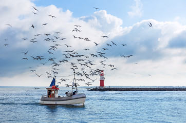 Fishing boat with seagulls in Warnemuende near Rostock, Germany