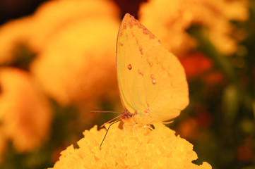 Beautiful night butterfly.