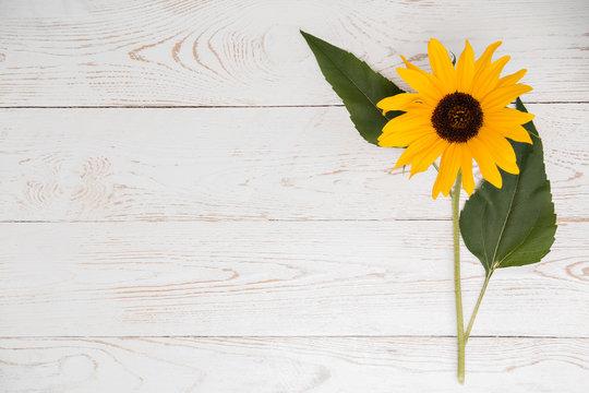 Sonnenblume auf Vintage Holz Hintergrund