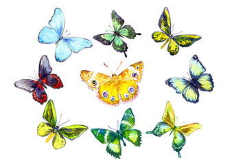 Hand painted Isolated Watercolor Illustration Colorful Butterflies Set