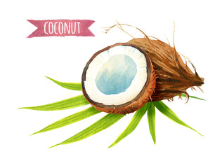Coconut set, watercolor illustration with clipping path