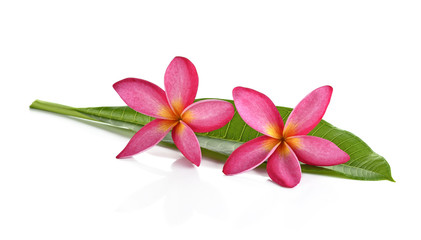 Plumeria flower on white background