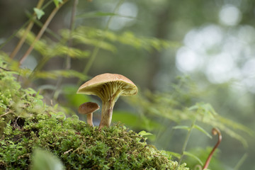 Mushroom in the rain forest.