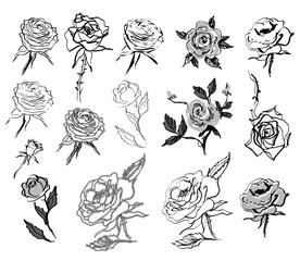 Sketched Roses Set