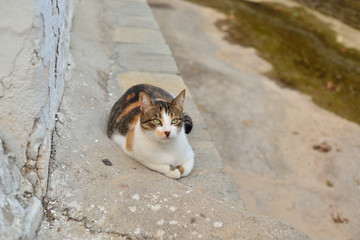 Greek cats. The feline friends are all over Greece just waiting to snap up a tid-bit under the taverna table or find a shady spot to snooze all day...its a cat's life...