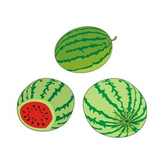 Vector set of fresh ripe striped watermelons isolated on a white background