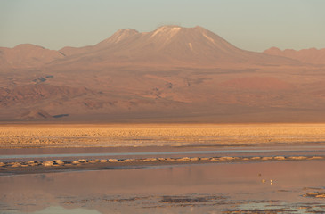 Photo Stands Magenta View of mountains reflected in a salt lake in Atacama Salar, Chile