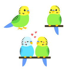 Cute cartoon budgie
