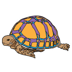 turtle sea icon cartoon design abstract illustration animal