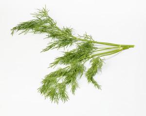 Dill green herb